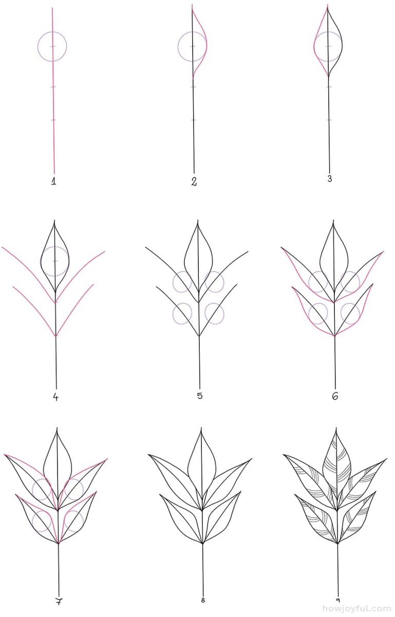 how to draw an ash leaf