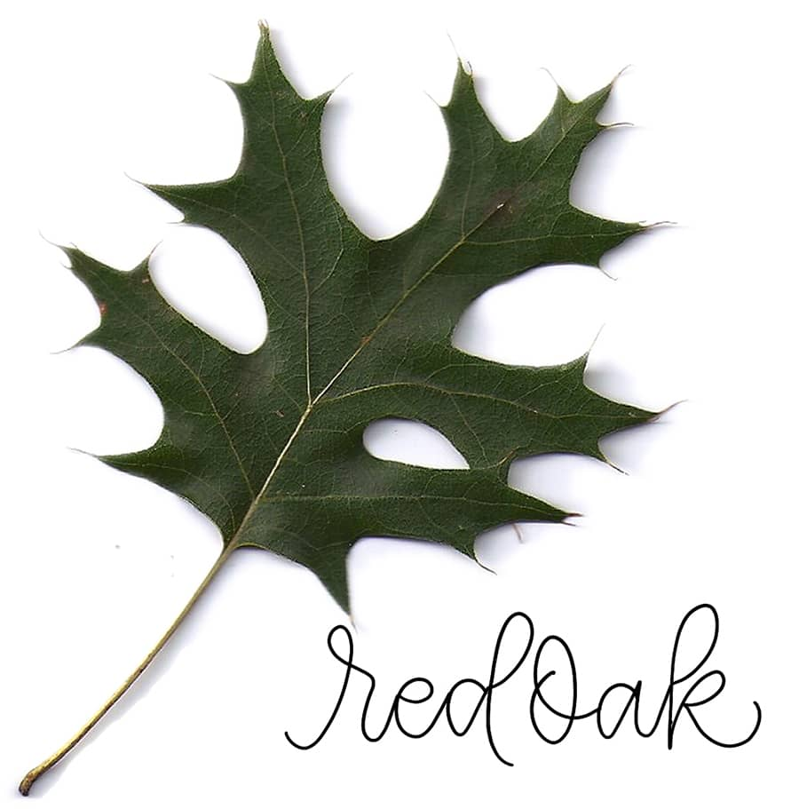 red oak leaf reference