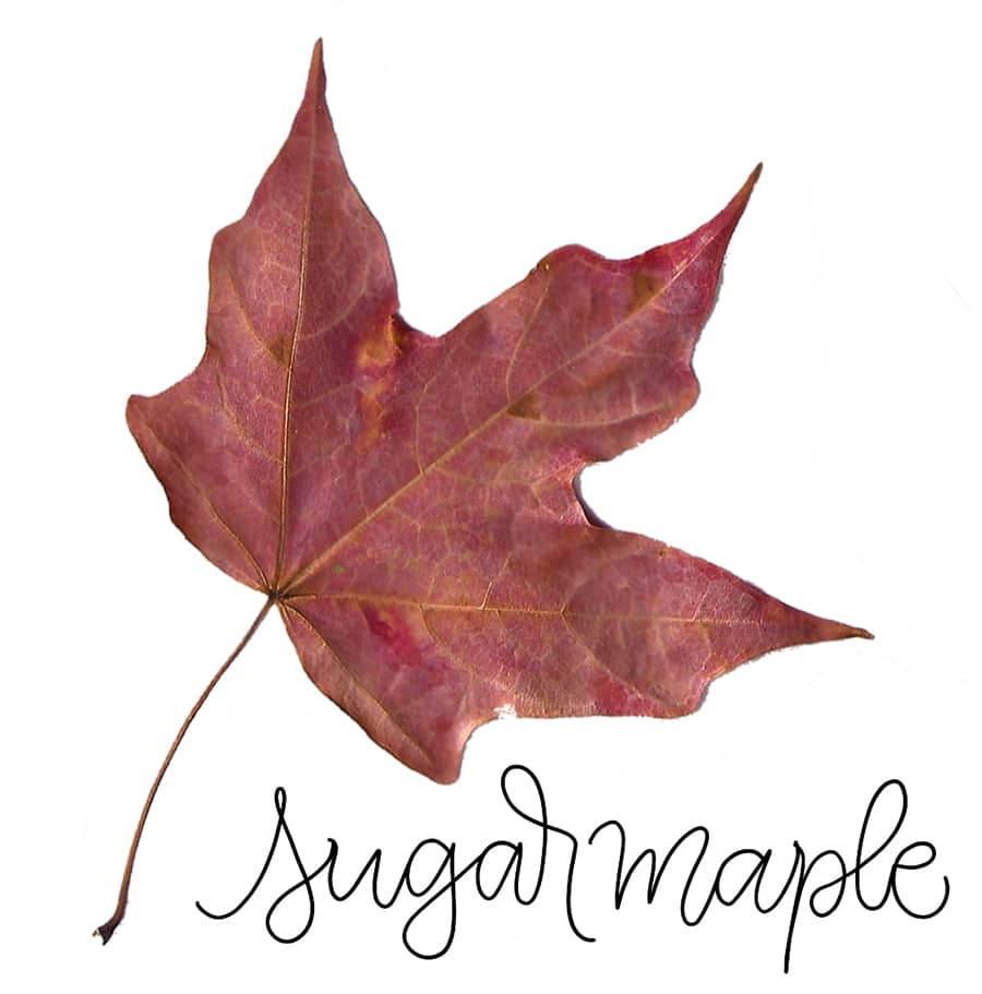 sugar maple leaf reference