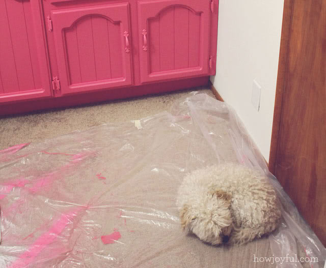 Curly in the office while painting