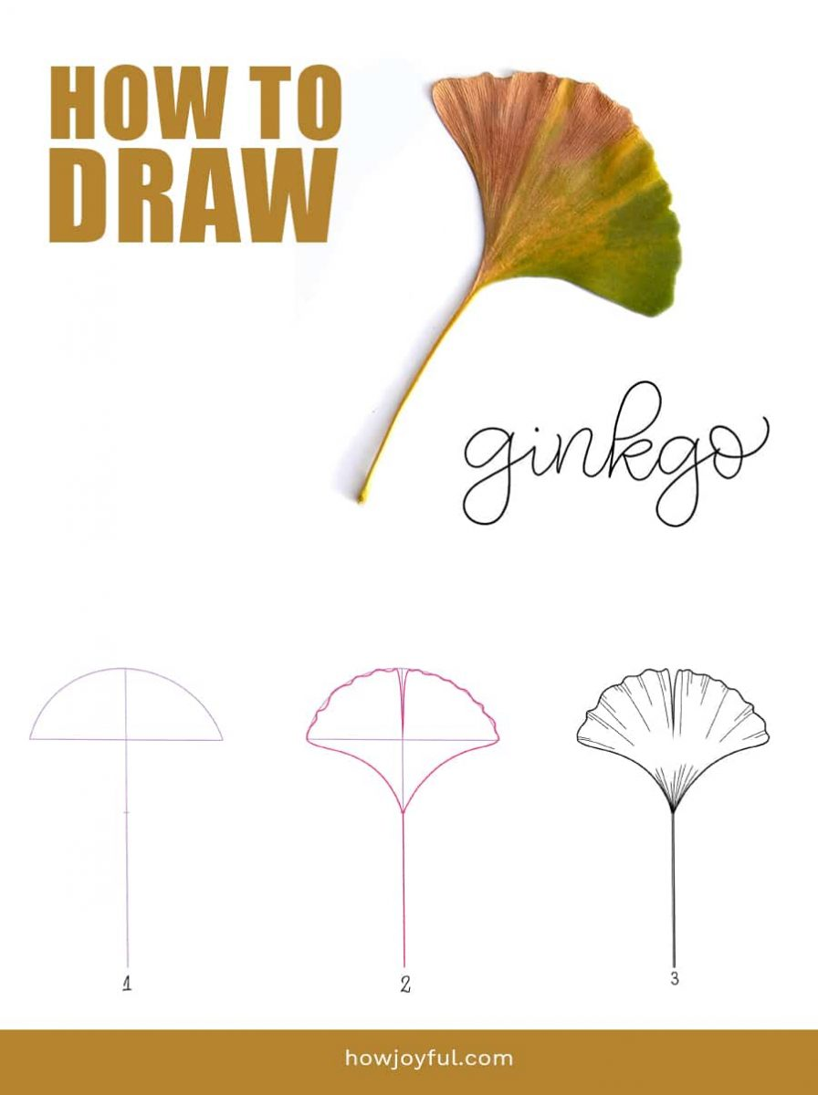 how to draw ginkgo leaf