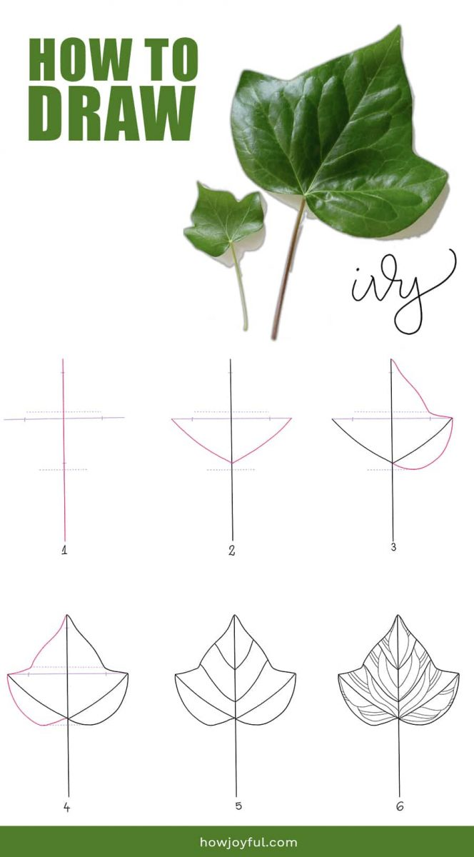 how to draw ivy leaf