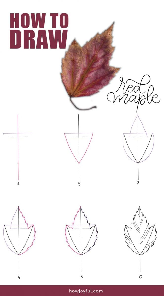 how to draw red maple leaf