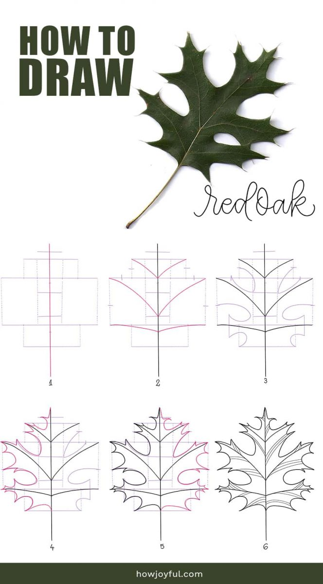 how to draw red oak leaf