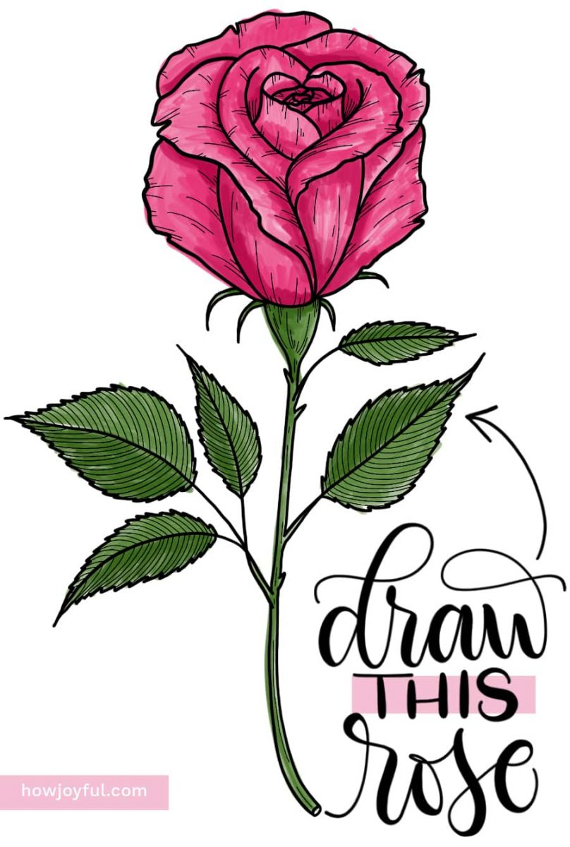 draw this rose